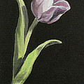 Purple Tulip by Sarah Parks
