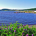 Purple Vetch Overlooking Rocky Harbour-nl by Ruth Hager