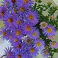 Purple  by Vijay Sharon Govender