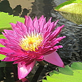 Purple Water Lily by Richard Reeve