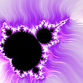 Purple White And Black Mandelbrot Set Digital Art by Matthias Hauser