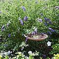 Purple Wild Flowers 1 by Jeelan Clark