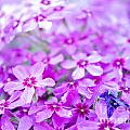 Purple Wildflower by Andrea Anderegg