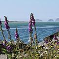 Purple Wildflowers At Netarts Bay by Athena Mckinzie