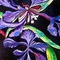 Purple Wildflowers by Lil Taylor
