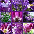 Purple Window by Joan-Violet Stretch