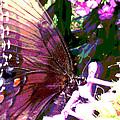 Purple Wings by Walter Klockers