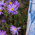 Purples And Blue by Kris and Sydney Riccella Kitzmiller