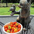 Pussycat And Tomatoes by Kathy Clark