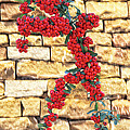 Pyracantha Berries On Stone Wall by Linda Phelps