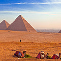 Pyramids And Camels by Matthew Bamberg