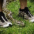 Python Snake In The Grass And Running Shoes by LeeAnn McLaneGoetz McLaneGoetzStudioLLCcom