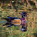 Quack by Gina Herbert