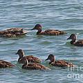 Quackers by William Norton