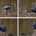 Quadriptych Landing Heron - 9529d by Paul Lyndon Phillips