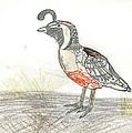 Quail Bird by Ethan Chaupiz