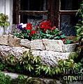 Quaint Stone Planter by Lainie Wrightson