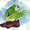 Quaker Parakeet Bird Portrait   by Olde Time  Mercantile