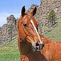 Quarter Horse Portrait Montana by Jennie Marie Schell
