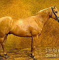Quarter Horse by Will and Deni McIntyre