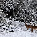 Quartet In The Snow by Tamara Gentuso