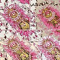 Quatro Floral - 22a by Variance Collections