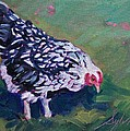 Queen Annes Lace        Hen by Sylvina Rollins