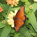 Queen Butterfly by Laurie Eve Loftin