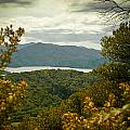 Queen Charlotte Sound by Mark Llewellyn