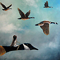 Queen Of The Canada Geese By Shawna Erback by Shawna Erback