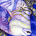 Queen Triggerfish Portrait by Pauline Walsh Jacobson