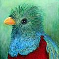 Quetzal Eye'n You by Raphael De Selva