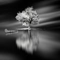 Quiet by David Senechal Photographie