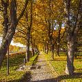 Quiet Parkway by Veikko Suikkanen
