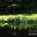 Quiet Reflection by Michelle Welles