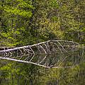 Quiet Waters by Debra and Dave Vanderlaan