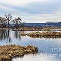Quiet Wetlands by Dianne Phelps
