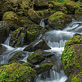 Quinault Waterfall by Bob Stevens