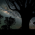 Quiver Trees And The Milky Way by Wolfgang steiner