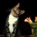 Quizzical Cat by Linda Mcfarland
