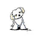 Quizzical Havanese by Kim Niles