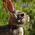 R Is For Rabbit by Priscilla Burgers