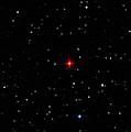 R Leporis Variable Star by Damian Peach