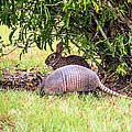 Rabbit And Armadillo by Zina Stromberg