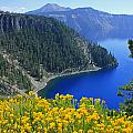 D2m5622-rabbit Brush At Crater Lake by Ed  Cooper Photography