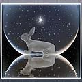 Rabbit by Harald Dastis