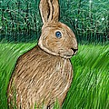 Rabbit In The Grass by Heidi Creed