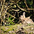 Rabbit In The Woods by David Head