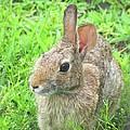 Rabbit by Lizi Beard-Ward