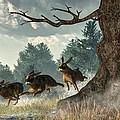 Rabbit Race by Daniel Eskridge